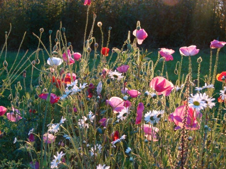 Nectary plants, Nursery, starts, seed