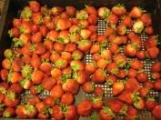 Strawberries 121013