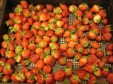 Strawberries 121013