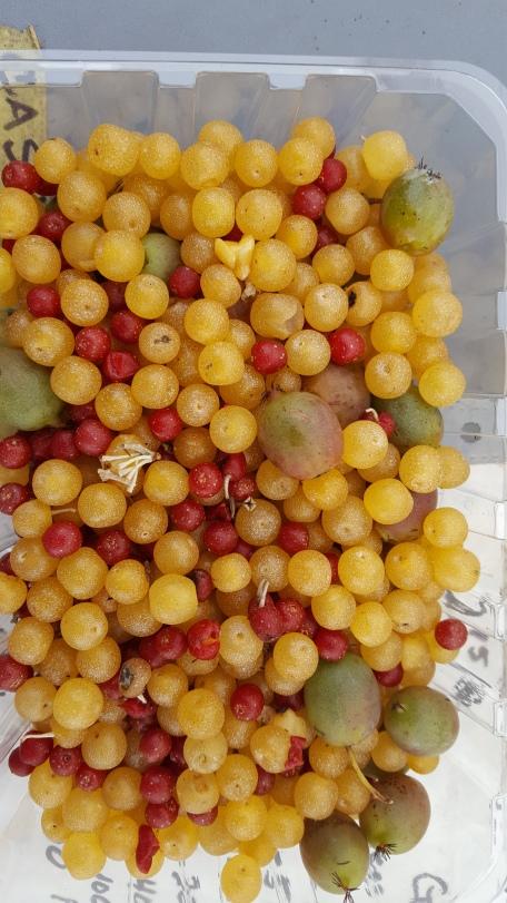 Autumn olive, kiwi, storables